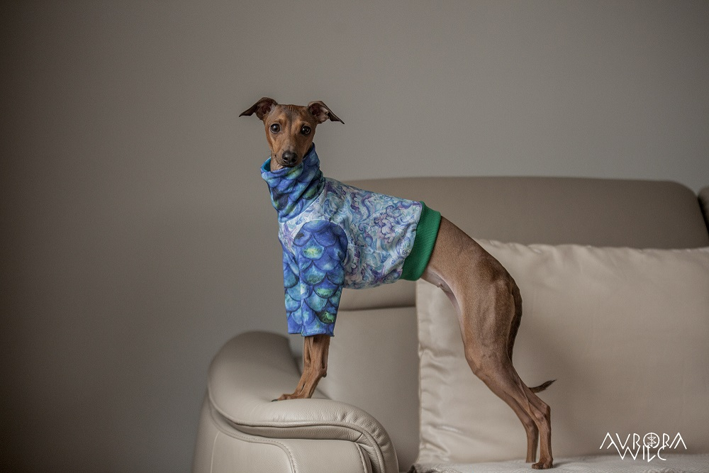 tailor-made dog clothing