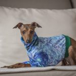How a passion turned into a profession –  tailor-made dog clothing