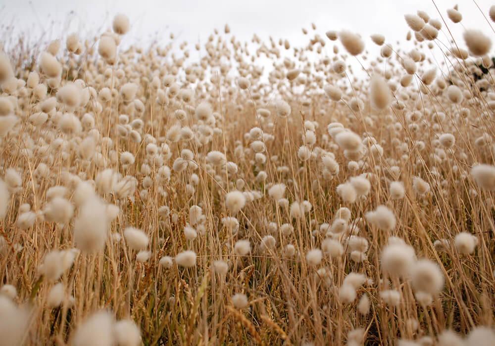 co to jest bawełna organiczna